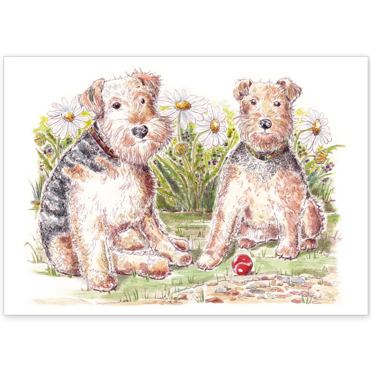 Welsh Terriers with Daisies – Greeting Card