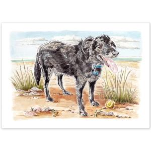 Pet Portrait - Hendrix Collie Cross on the Beach