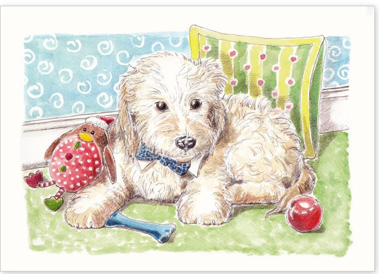 Pet Portrait - Boris the Cockerpoo