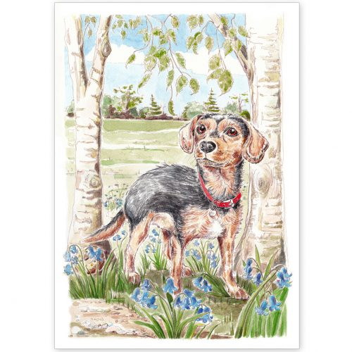 Pet Portrait - Dudley, Crossbreed, in the Park