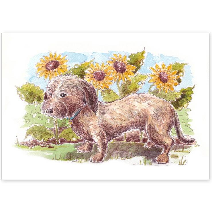 Wire Haired Dachshund – Greeting Card