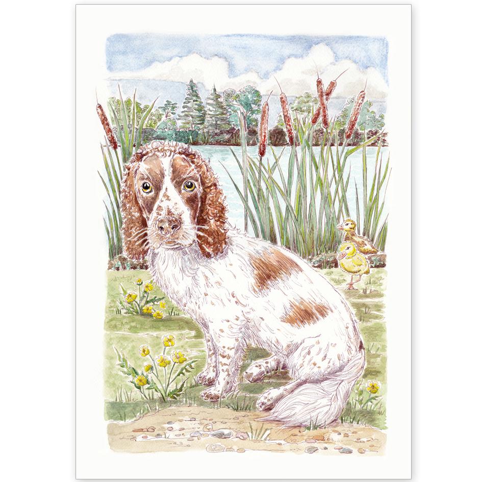 Pet Portrait - Myah the Springer Spaniel