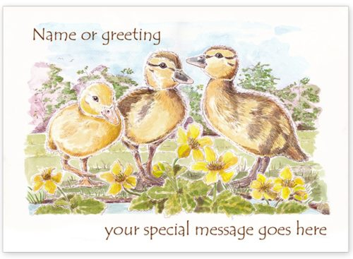 Ducklings with message