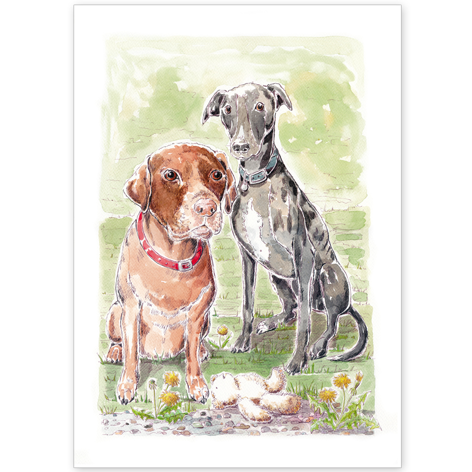 Pet Portrait - Benji and Brooke, Chocolate Labrador and Lurcher