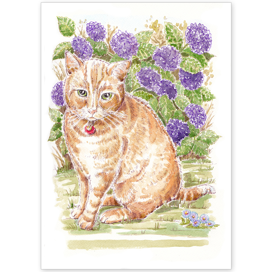Pet Portrait - Darcy the Ginger Cat