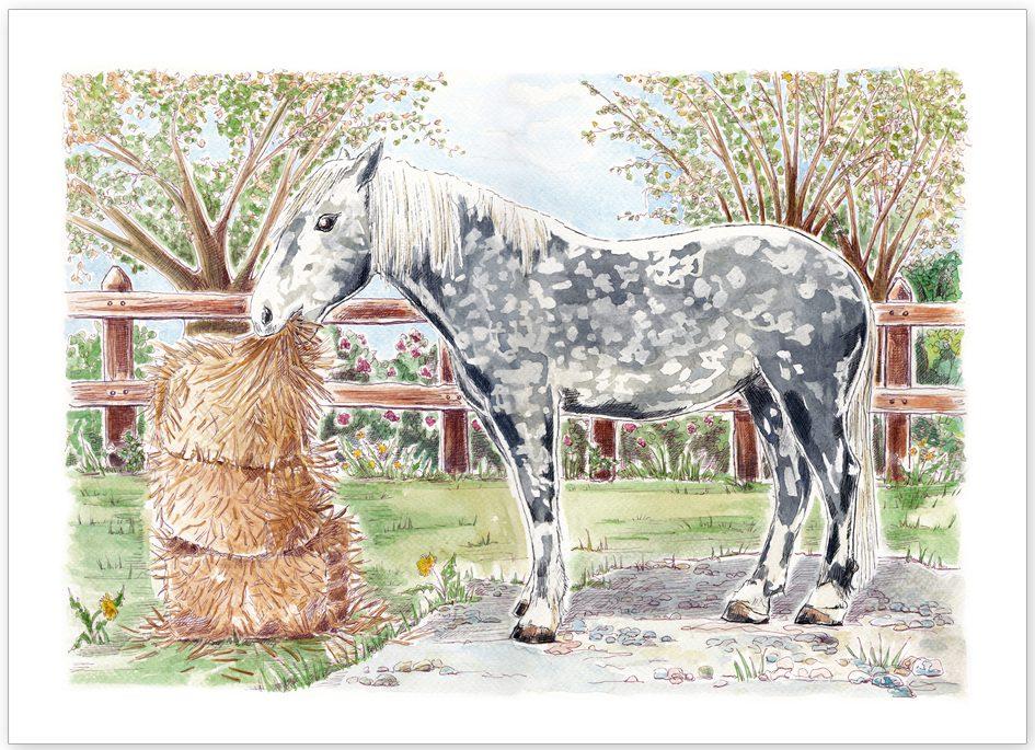 Pet Portrait -Oliver the Grey Horse