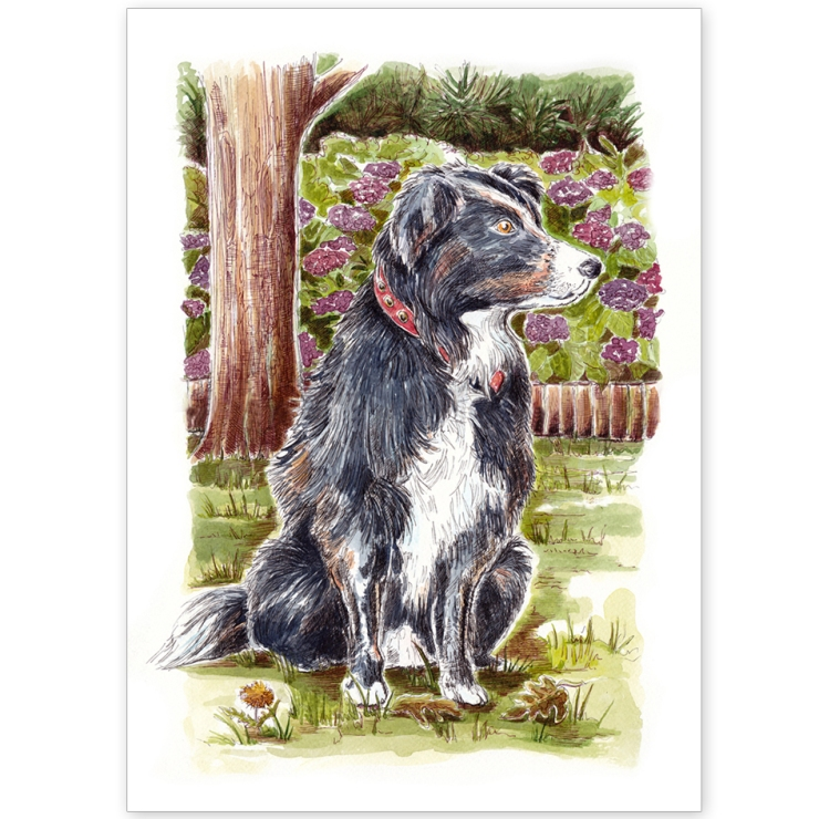 Border Collie in the Garden - Greeting Card