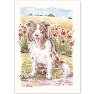 Pet Portrait - Dancer the Brown and White Collie in Poppy Field