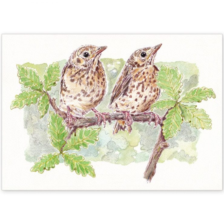 Baby Thrushes - Card and Print