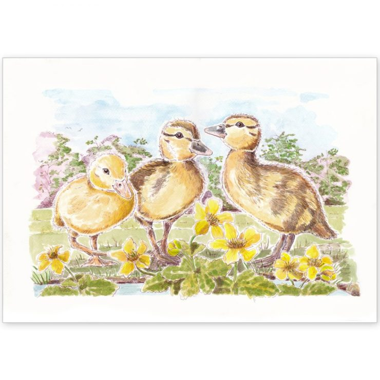Duckling Trio - Card or Print