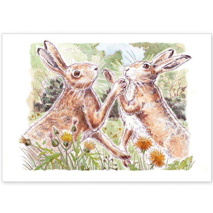 Boxing Norfolk Hares