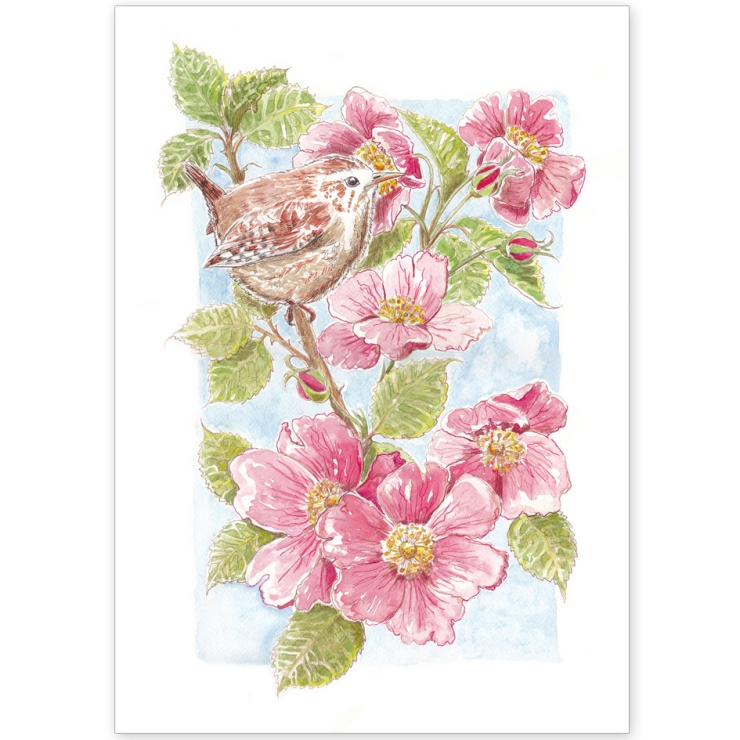 Norfolk Wren and Roses - Greeting Card