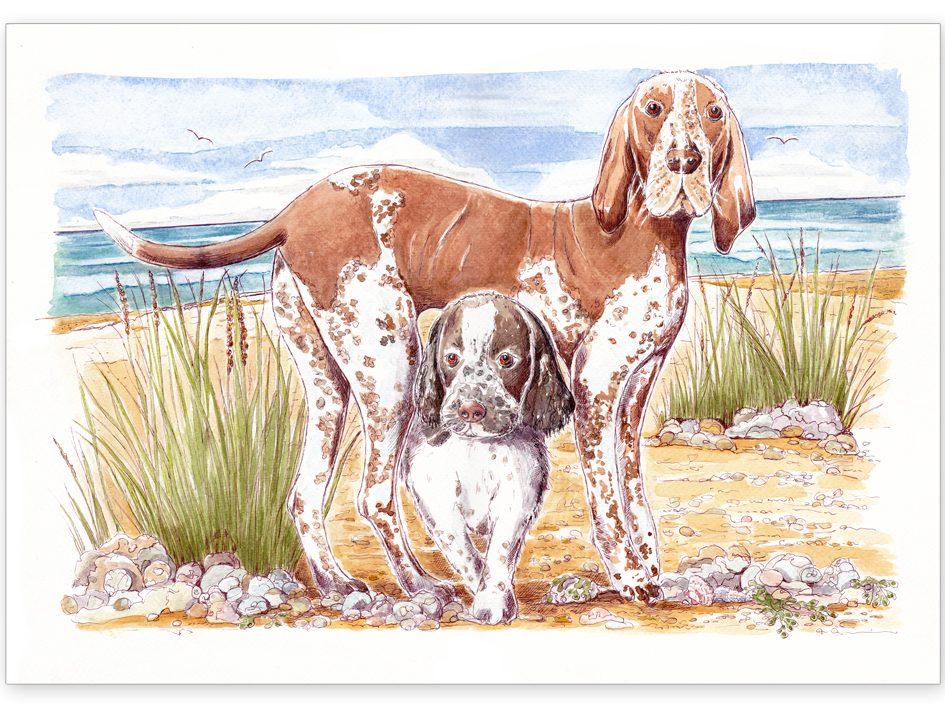 Pet Portrait - Martha and Eddie , Bracco and English Springer
